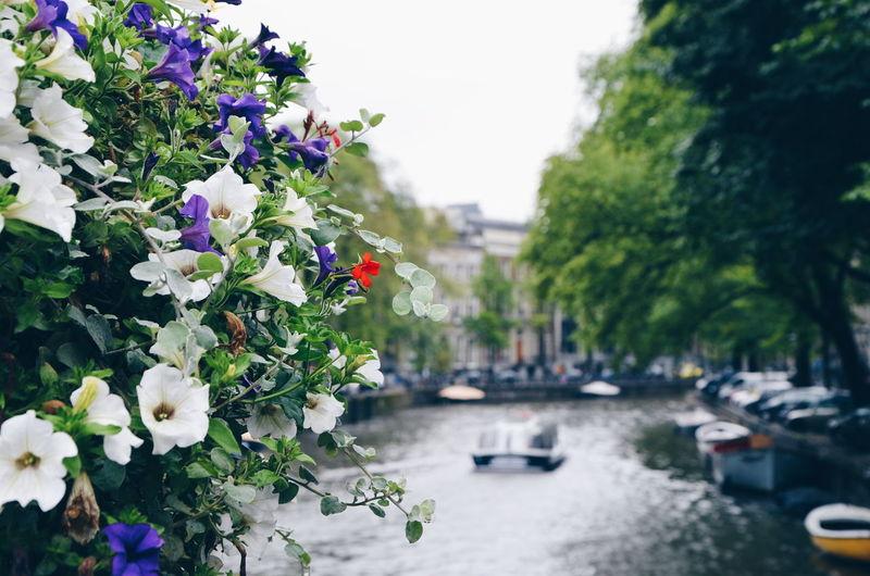 Amsterdam Boat Channel City Europe Flower Launch Motorboat Outdoors Transportation Traveling VSCO Vscocam