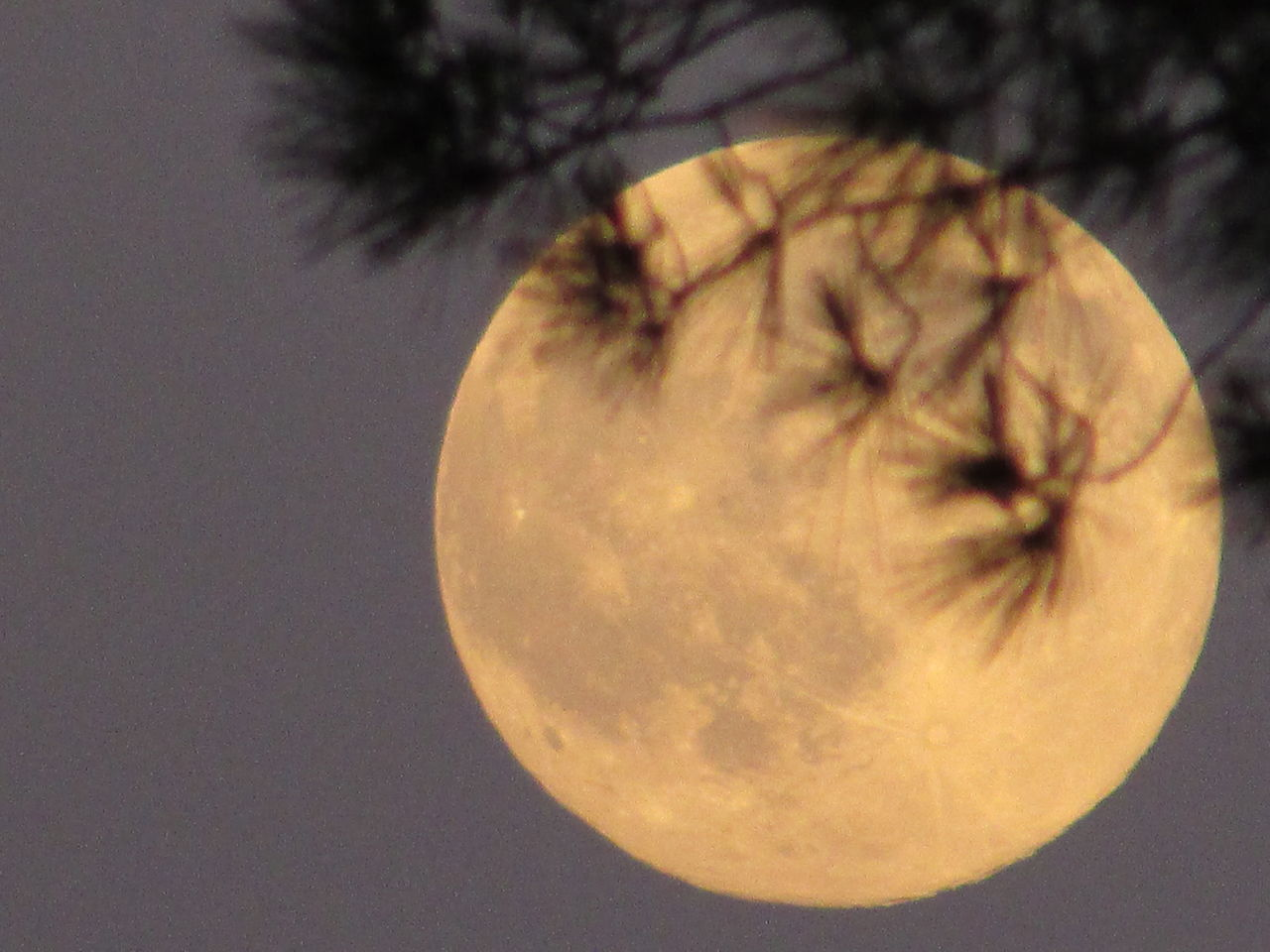 close-up, moon, no people, beauty in nature, nature, night, outdoors, tree