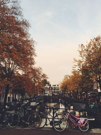Showcase: November Autumn Amsterdamcity Netherlands