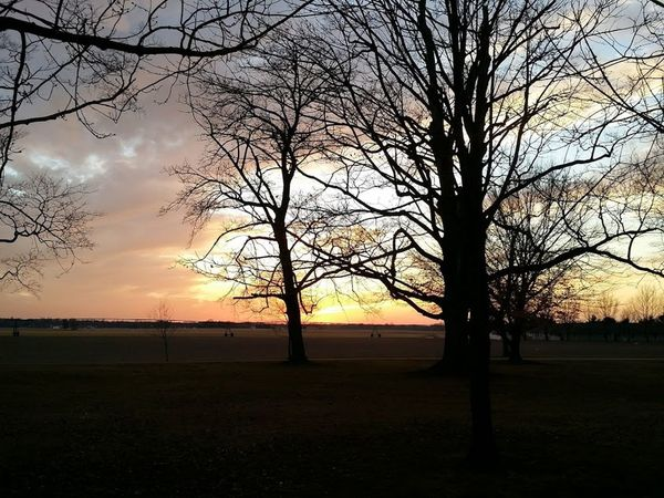 Perfect Tranquil sunset captured at my old job, it was good for something! Back Lit Bare Tree Beauty In Nature Branch Cloud Cloud - Sky Dramatic Sky Farm Field Nature Nature Lover No People Non-urban Scene Outdoors Remote Scenics Sky Sunset Tourism Tranquil Scene Tranquility Tree