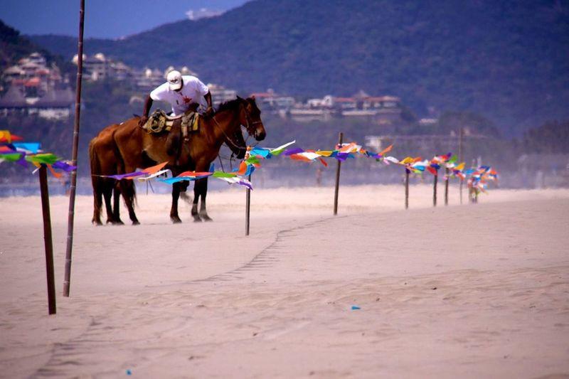 Mexico Horse