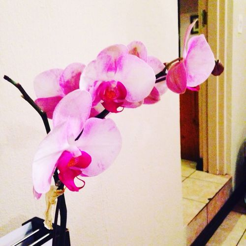 Orchids Pink Color No People Beautiful Fragility Indoors  Love ♥ AnniversaryGift