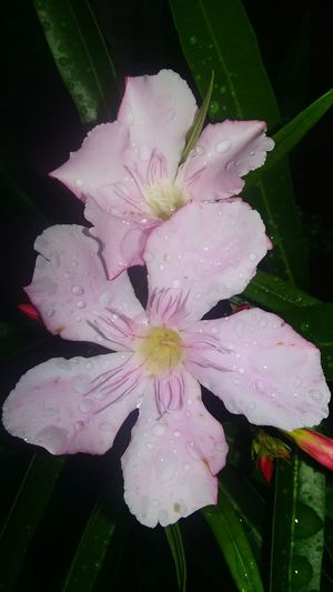 Flower Collection Aftertherain Pink Flower Lovethecolorpink WetLook