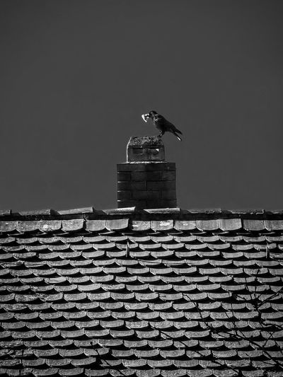 Low angle view of seagull on roof