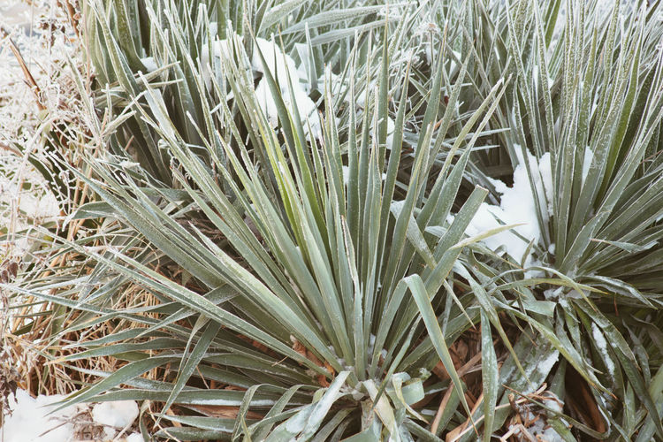 Plant Growth Nature Beauty In Nature No People Field Day Close-up Green Color Land Vulnerability  Tranquility Winter Grass High Angle View Cold Temperature Fragility Outdoors White Color Botany Blade Of Grass