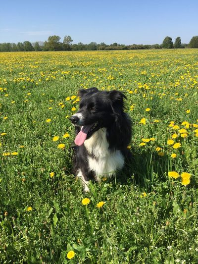 My Bordercollie One Animal Plant Canine Dog Flower Mammal Animal Themes
