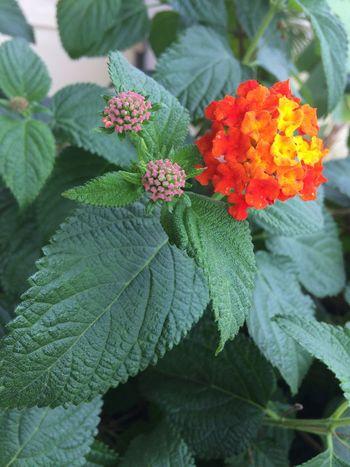 Macro Flower 🌺