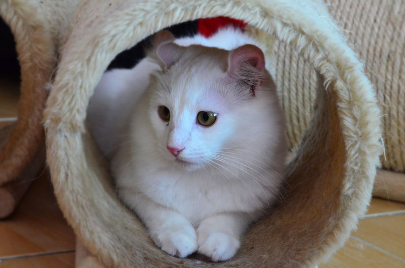 Close-Up Of Cat In Scratching Post