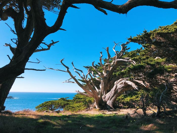 Old wood. Tree Tree Trunk Nature Beauty In Nature Scenics Tranquility Tranquil Scene Landscape Growth Sea Branch No People Horizon Over Water Day Outdoors Sky Blue Water Bare Tree Clear Sky