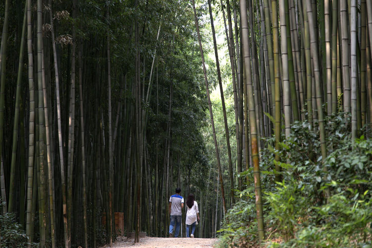 Juknokwon, the famous bamboo park in Damyang, Jeonnam, South Korea Damyang Juknokwon Bamboo - Plant Bamboo Grove Bamboo Park Beauty In Nature Day Forest Full Length Growth Lifestyles Men Nature Outdoors People Real People Scenics Standing Tree Tree Trunk Walking Women