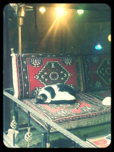 Cat Sleep Sofa Cute