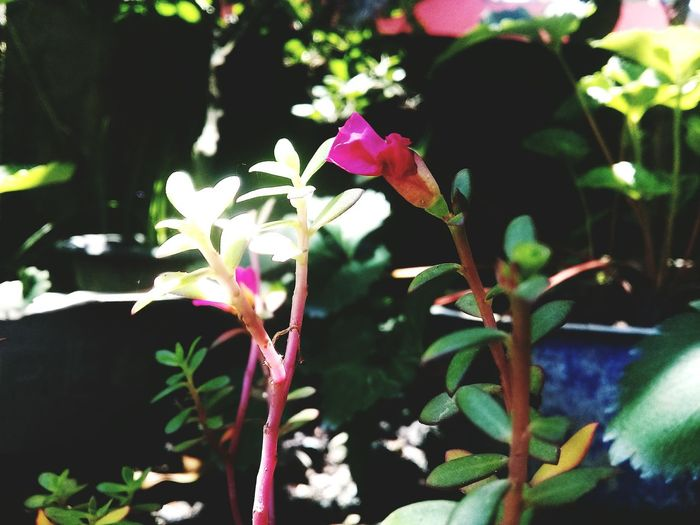 flowers in the afternoon #lombok #natural #flower #lombok #flower  #Nature  Nature Outdoors Day First Eyeem Photo