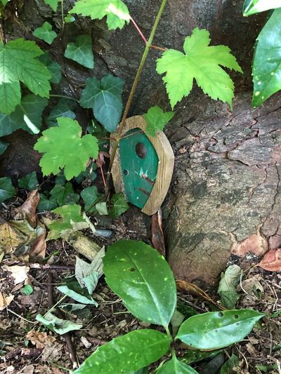 Magic Imagination Green Door Fairy Garden Fairy Door Tree Trunk Leaves Leaf Plant Part Green Color Growth Plant Nature Day No People Outdoors Close-up Green