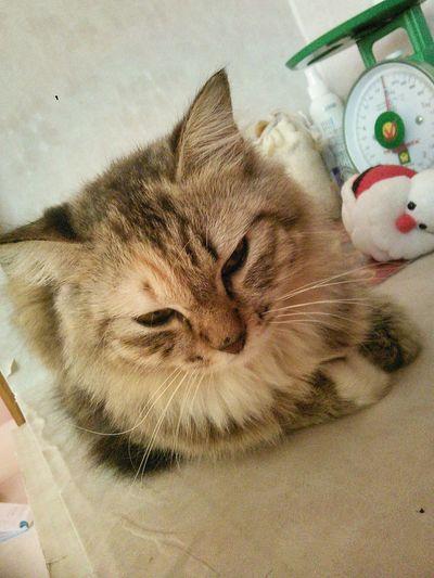 Cat Cat♡ Pet Love Pet Lover Petlover Pet13 Cat Lovers Pet Pets Cats