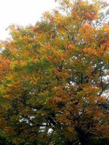紅葉🍁 Nature Day No People Outdoors Beauty In Nature Tree Sky