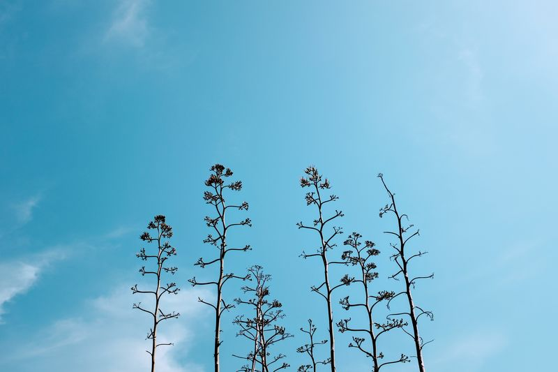 Beauty In Nature Blue Cloud - Sky Copy Space Day Flower Flowering Plant Fragility Freshness Growth Low Angle View Nature No People Outdoors Plant Plant Stem Sky Sunlight Tranquility Vulnerability