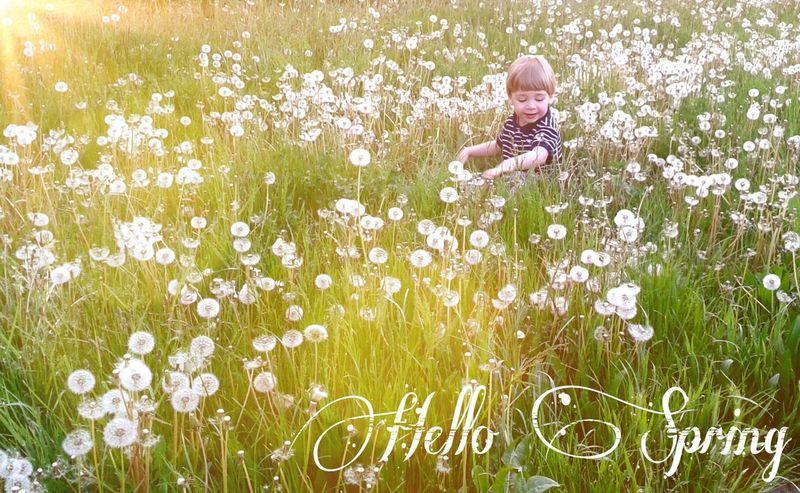 Boy Child Childhood Dandelion Dandelions Grass Green Hellospring Kid Seasons Spring Sunshine
