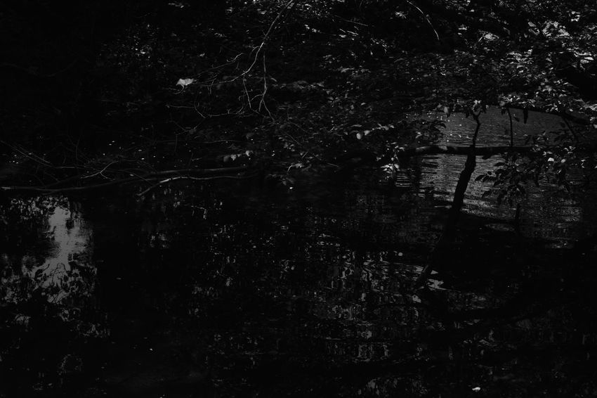 Dark Abstract Beauty In Nature Blackandwhite Day Forest Grey Monochrome Mystery Nature No People Outdoors Tree Water