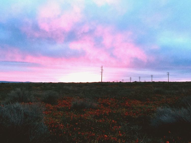 Sunrise EyeEm Nature Lover Sky Therapy SoCal Addicted To Nature Sunset #sun #clouds #skylovers #sky #nature #beautifulinnature #naturalbeauty #photography #landscape EyeEm Best Shots - Sunsets + Sunrise Coffee Shot Taking Photos Walk With Me