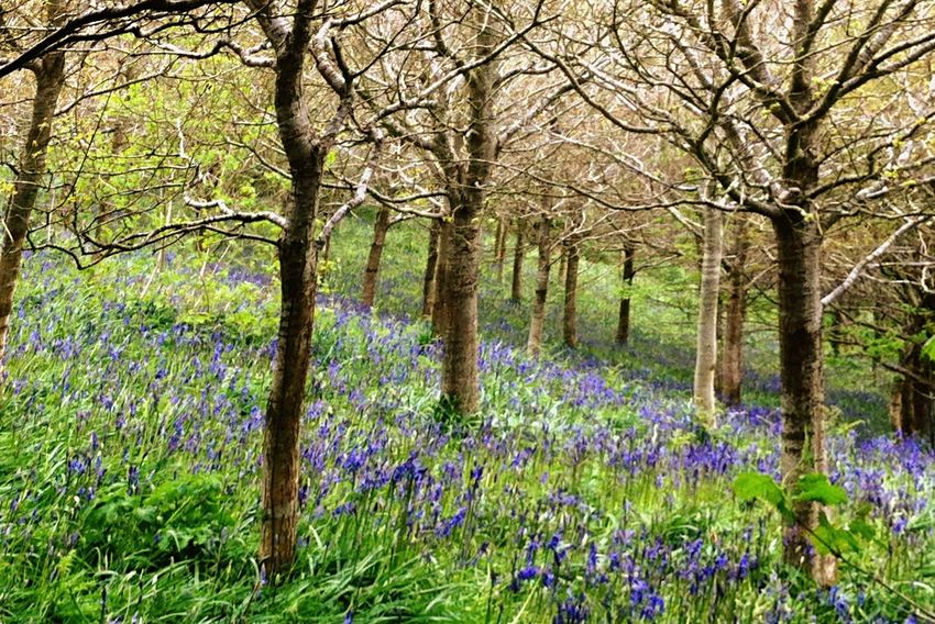 Somewhere only we know Nature woods Dorset Favourite Walk Bluebells Spring Dorset Wildlife Sherborne Trees Fresh New Beginnings First Eyeem Photo