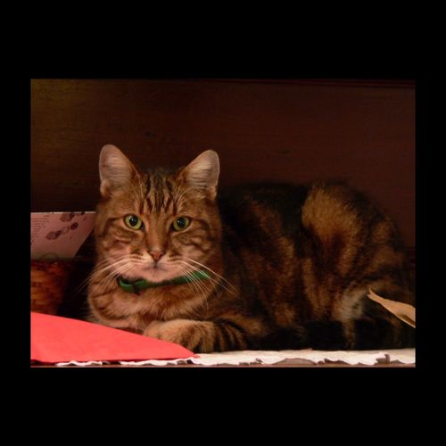 Les yeux verts de Léon-le-Chat. Eyes EyeEm Cat Cute Pets Pet Cat Cat♡ Catoftheday Animal Chat EyeEm Best Shots