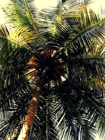 Palm Tree Palm Leaf Tree Low Angle View Palm Frond Growth