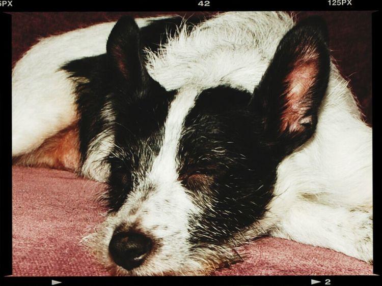 Sleepy Time My Dog <3 Tired Winding Down
