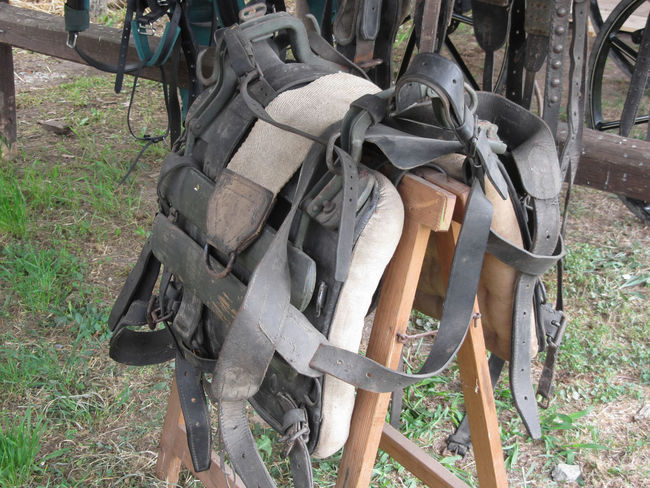 Worn leather horse bridles and bits hanging on wooden fence Bit  Bridle Buckle Country Equestrian Equine Equipment Halter Hanging Harness Horse Horseback Leather Martingale Reins Riding Ring Saddle Set Stable Stirrups Strap Strapping Western Worn