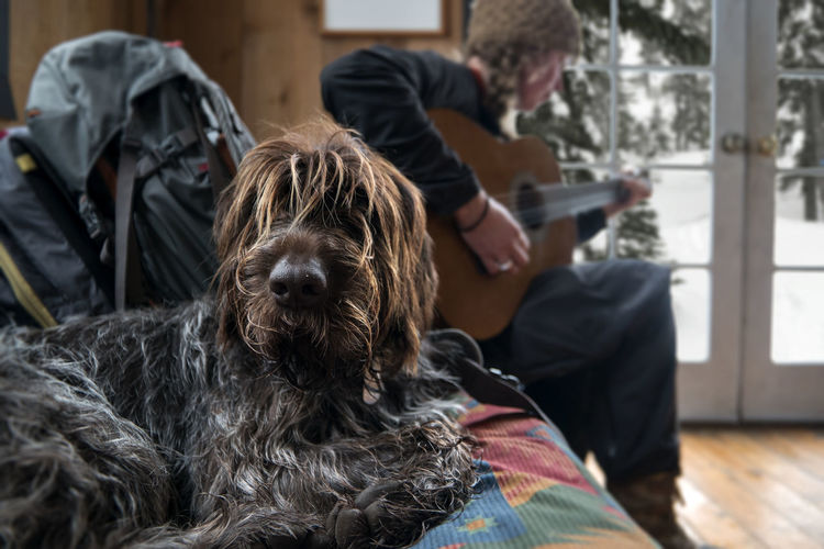Shaggy. Playing Music Relaxing Jamming Mountains Mountain Life Backcountry Hut Hut Yurt Backcountry Backcountry Skiing Shaggy Dog Shaggy Fur Large Dog Down Time  Relaxation Chilling Moments Good Day Snowing Dog Canine Scruffy Guitar Guitarist Cabin Cabin Life Dog On Sofa Music Musician The Portraitist - 2018 EyeEm Awards Analogue Sound
