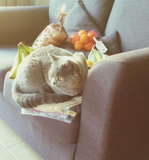 Cat♡ Strange Cat Strange Pets
