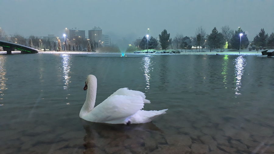 Swan Bird City