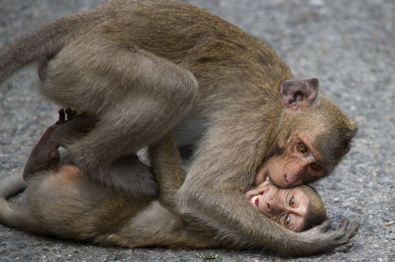 High angle view of monkeys on street