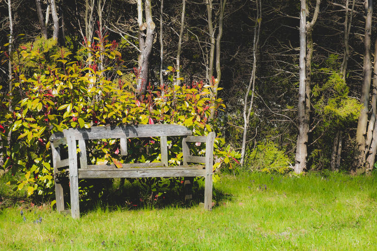 Empty bench on field by trees in forest