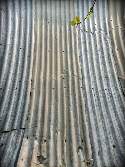 green plant & galvanize plate background Galvanize Plate Old Material Building Old Grunge Plants Green Low Section Pattern High Angle View