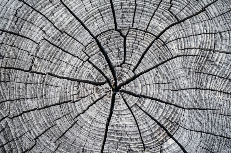 Backgrounds Full Frame Pattern Bark Tree Tree Stump Tree Ring No People Close-up Cracked Textured  Plant Shape Natural Pattern Concentric Nature Day Circle Cross Section Geometric Shape Outdoors Wood Grain