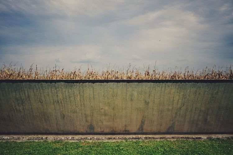 Corn, behind the wall | Behind The Wall Carlo Scarpa Architecture Concrete Corn Field Getting Inspired Tomba Brion Clouds And Sky EyeEm Italy |