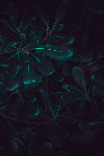 Full frame shot of plants at night