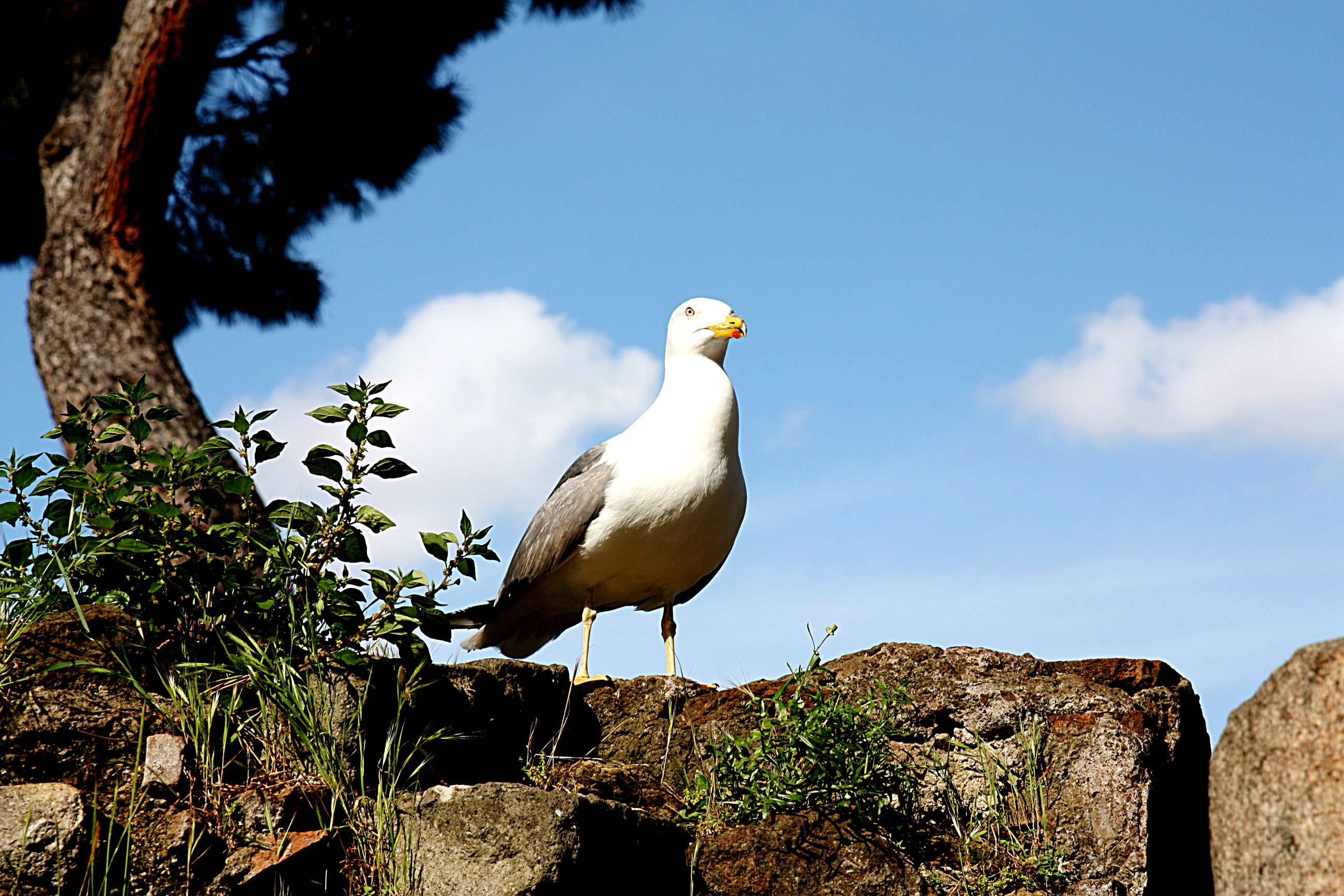 animal themes, bird, animals in the wild, wildlife, one animal, perching, full length, sky, nature, seagull, side view, beak, outdoors, tree, day, beauty in nature, blue, focus on foreground, no people, white color