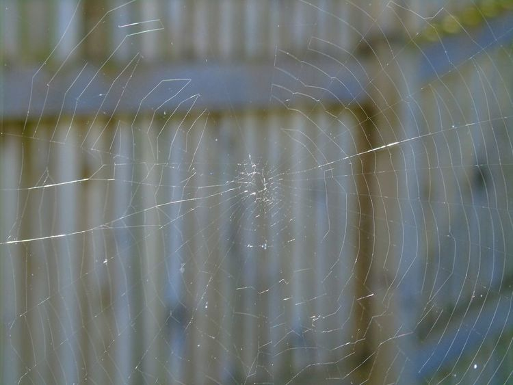 Speedler Weebses 😨 Uk Scotland Eye Em Scotland Minimal Spider's Web Backgrounds Close-up Full Frame Spider Web No People Fragility Nature Outdoors Day Beauty In Nature Concentric Small Creatures Arachnid In The Garden Daylight Web Garden Photography Spider Silk Shooting Photos Daytime