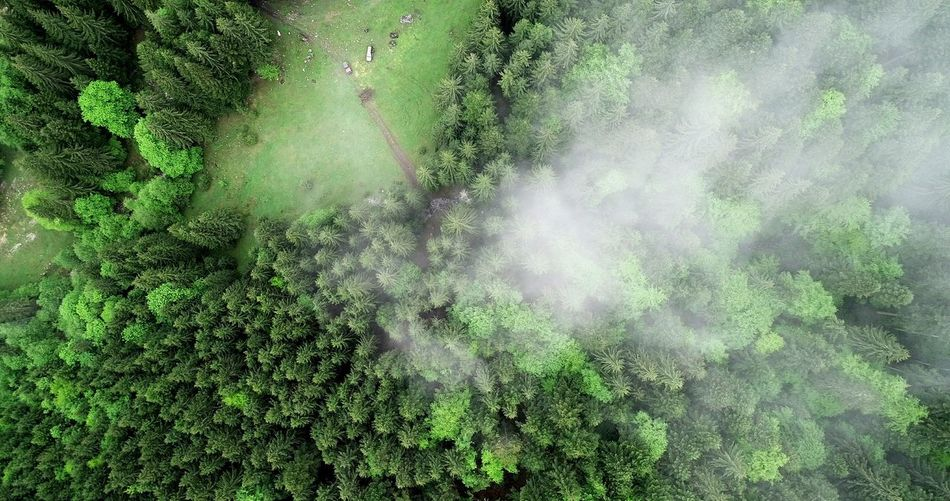 EyeEmNewHere Aerial Photography Picea Abies Aerial View Summer Exploratorium Aerial Shot Forest Photography Nature Photography Water Tree Backgrounds Full Frame Close-up Green Color Rainfall Green Grassland Woods Countryside Plant Life Lush Foliage
