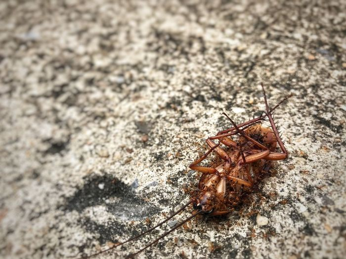 Dead cockroach on the road Death Dead Cockroach Dead Cockroach Animal Themes Invertebrate Animal Animal Wildlife Animals In The Wild Insect One Animal Close-up