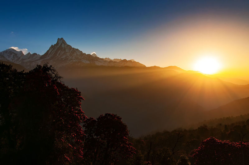 Sunrise over Annapurna Mountain range during springtime. Annapurna Mountain Range Himalayas Nepal Rhododendron Snow Capped Mountains Tadapani Beauty In Nature Cold Temperature Day Gandaki Landscape Machapucharé Mountain Mountain Range Nature No People Outdoors Scenics Sky Springtime Sun Sunrise Sunset Tranquil Scene Tranquility