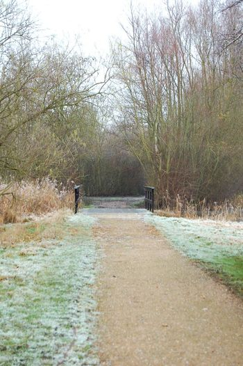 Walks amongst the frost Shades Of Winter Tree Nature Day Beauty In Nature Outdoors Water No People Sky Grass Mammal