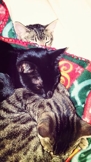 On A Cold Day Cats Sleeping Style Lovely <3 <3 <3