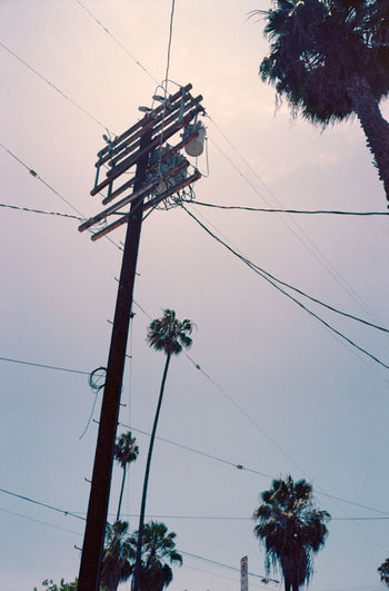 Angelino Blue Sky Cable Citry City Clear Sky Connection Day Electricity  Electricity Pylon Fuel And Power Generation Low Angle View Nature No People Outdoors Palm Tree Portrait Power Line  Power Supply Sightseeing Sky Technology Telephone Line Transformer Tree The Street Photographer - 2017 EyeEm Awards EyeEmNewHere