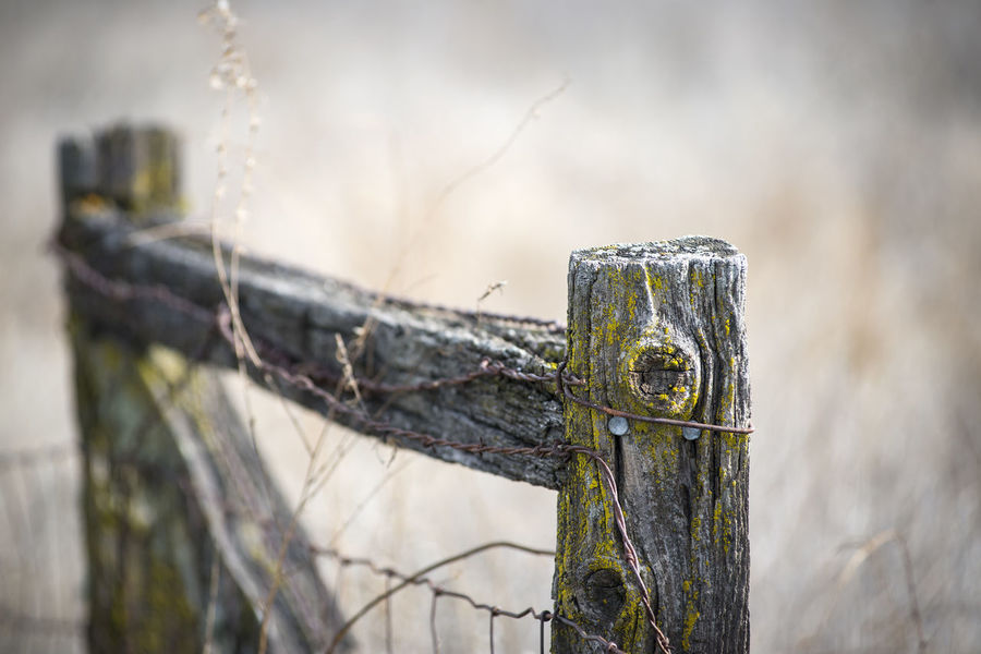 Old fence post Horizontal Composition Old-fashioned Barbed Wire Close-up Fence Post With Barbed Wire Nature No People Outdoors Shallow Focus Texture Wood - Material Wooden Post