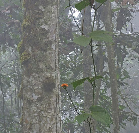 Flower in the fog. #foggy #yellow #flowers Beauty In Nature Branch Day Forest Green Color Growth Leaf Nature Outdoors Plant Plant Part Real People Tree Tree Trunk Trunk Vertebrate