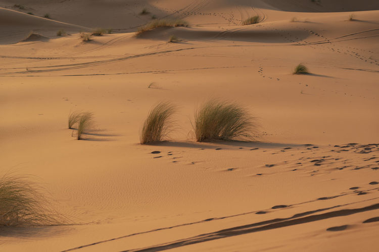 Sand Desert Sand Dune Arid Climate Landscape Tranquility No People Remote Plant FootPrint Day Sky Red Sand Desert Landscape Desert Plants Footprints Footprints In The Sand Tracks In The Sand Tracks North Africa Middle East Sahara Sahara Desert Tranquil Scene Climate