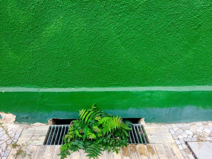 High angle view of plants growing from sewer by green wall