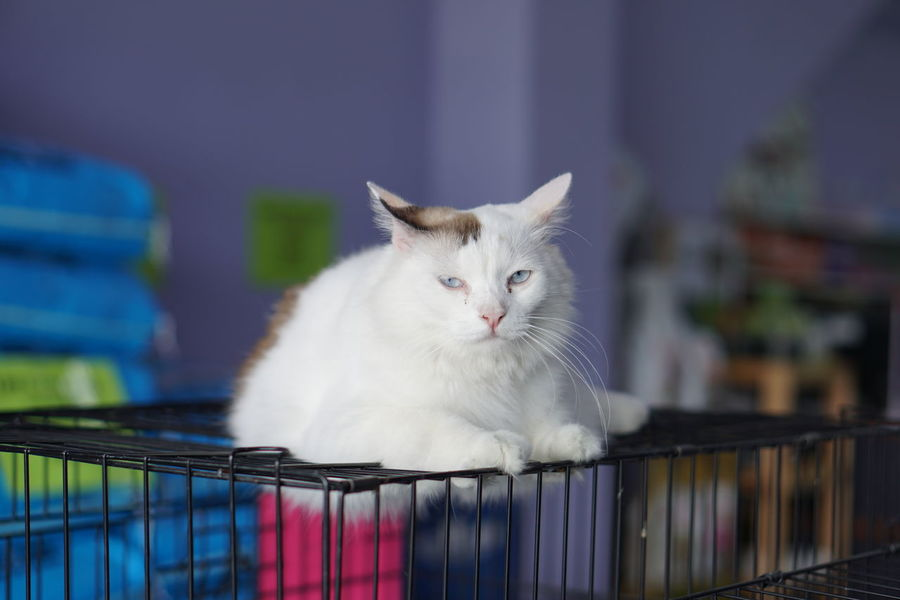 Portrait of cute fluffy cat stays on cage Animals In The Wild Cuteness Feeding  Lick Nature Relaxing Adorable Animal Themes Close-up Color Cute Day Domestic Animals Domestic Cat Feline Fluffy Indoors  Kitten Little Mammal No People One Animal Pets